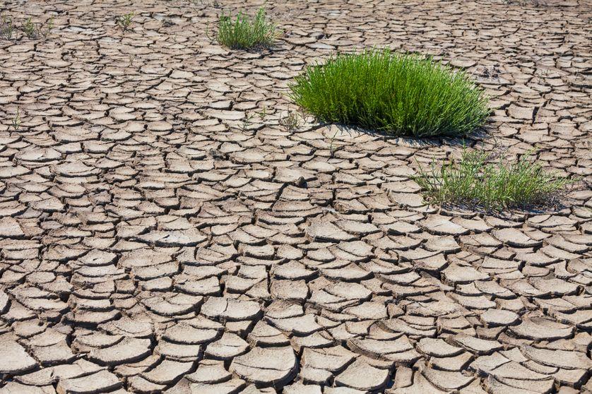 Charente : la sécheresse tropicale de Météo France
